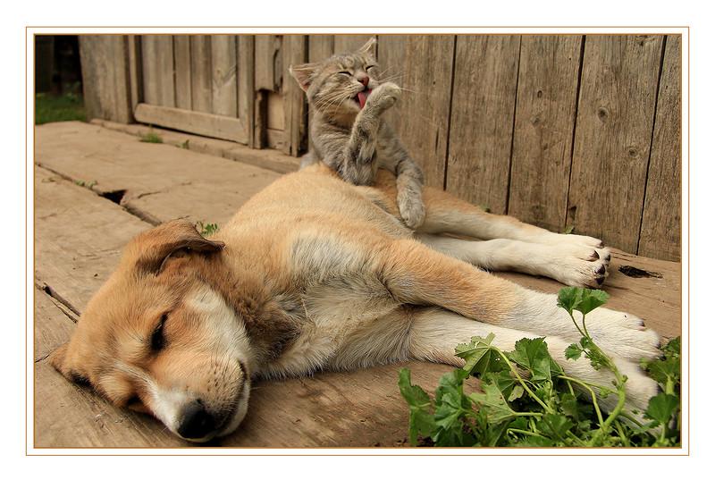 Деревенская идиллия в фотографиях Сергея Красноперова