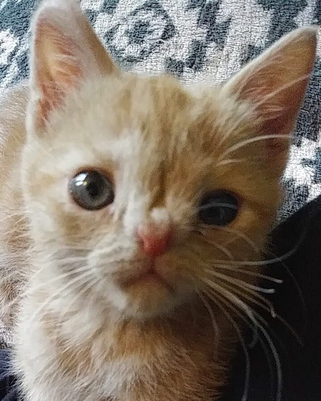 Необычного котенка хотели отдать другим людям, но малышка придумала, как остаться в родном доме!