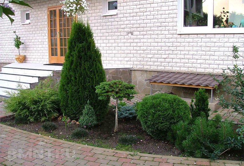 Хвойные растения для сада. Советы по подбору и посадке