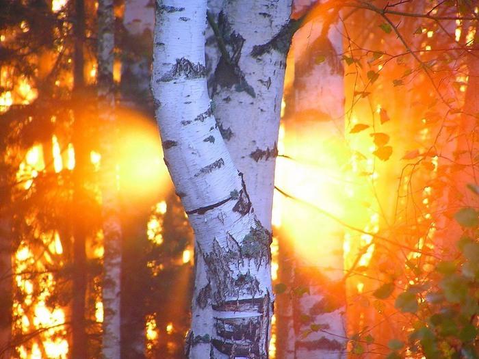 Деревья в культуре славян