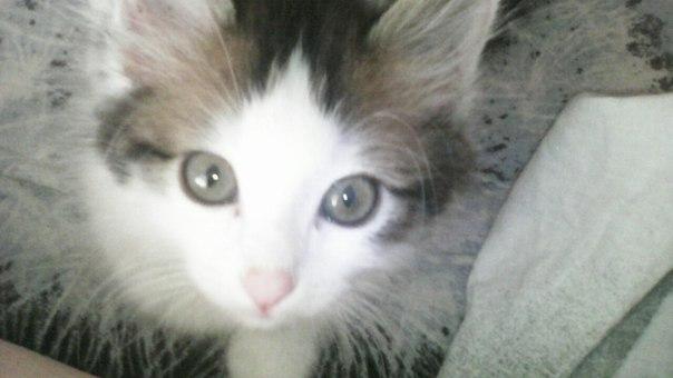 Войдя в стены универа, увидела, как ко мне кинулся котёнок...