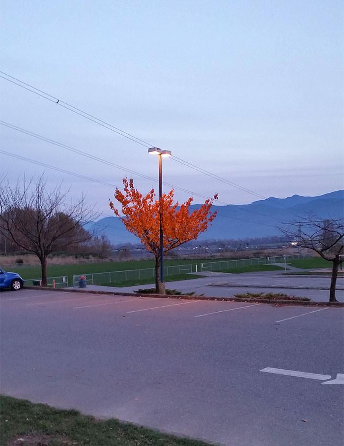 Сохранило листья благодаря свету фонаря дерево, живучесть, жизнь, мир, планета, растительность, фото