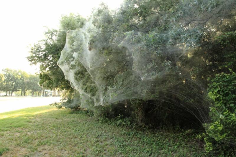 Пауки захватили парк в пригороде Далласа