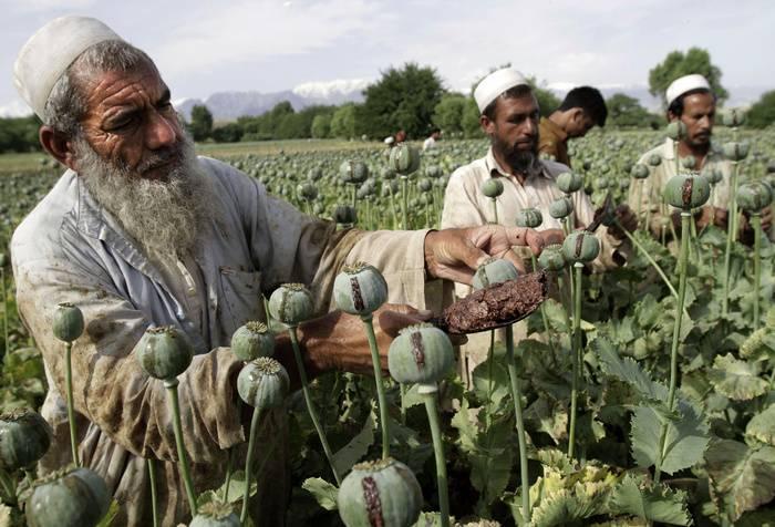 МИД РФ: Антинаркотическая компания США в Афганистане провалилась