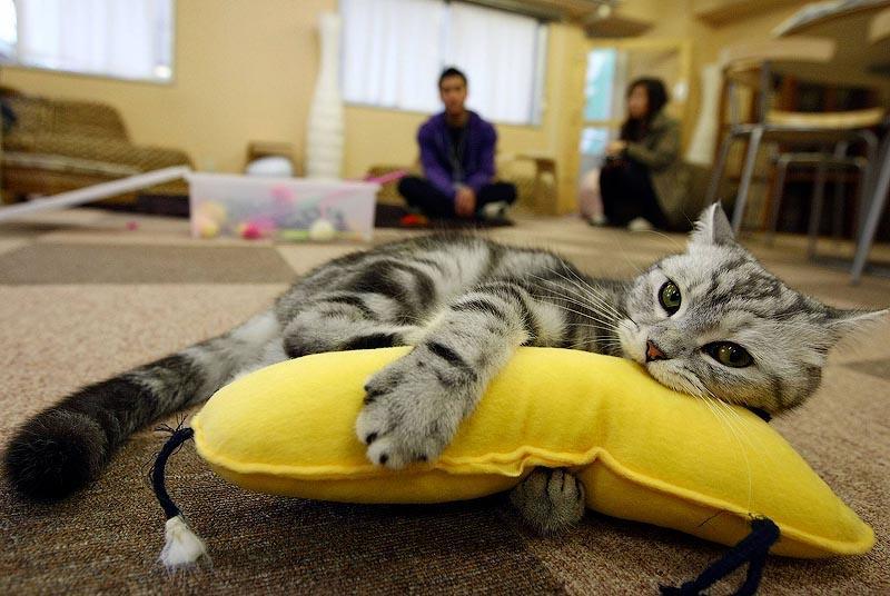 cats04 10 мест, в которых обожают кошек