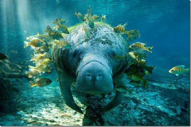 Животные под водой животные, под водой, фото