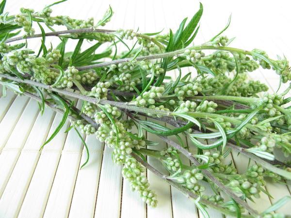 Полынь - сорняк или полезное растение?