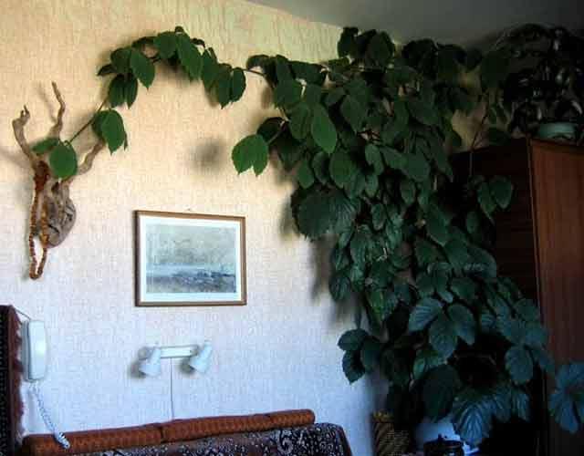 plants1215-3.jpg
