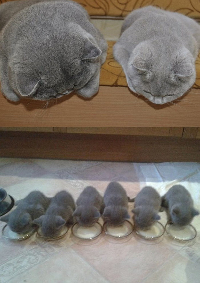 2. Любуются малышами котенок, кошка
