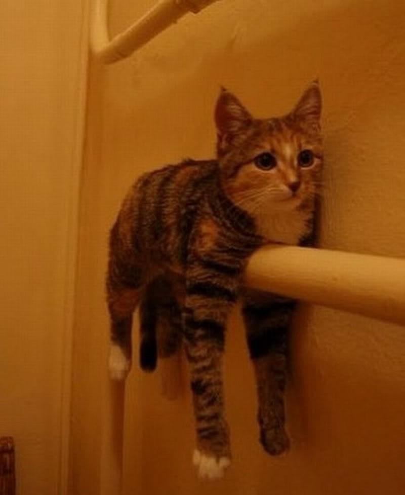 lolcats58 100 лучших фотографий кошек всех времен и народов