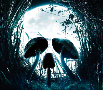 Какие симптомы у отравления грибами?