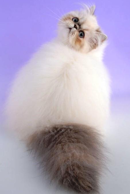 Сегодня первый день весны и Международный день кошек! Поздравим наших пушистых домоседов?