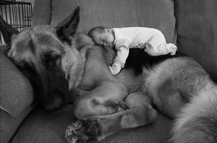 С няней  дружба, ребенок, собака