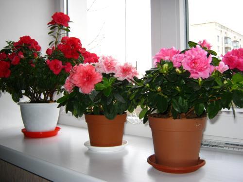 Секреты роскошного цветника у вас дома