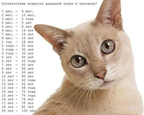 Расчет лет у котов