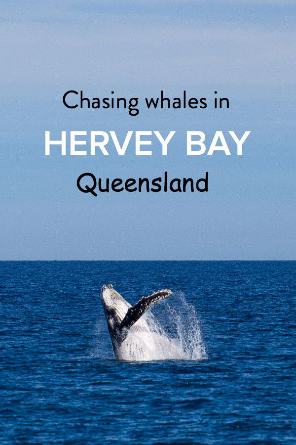 Chasing Whales in Hervey Bay
