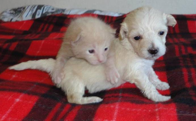 Котенок и щенок с рождения вместе