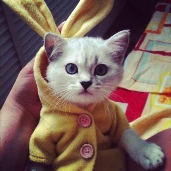 Маленький зайчик кардиган, кот