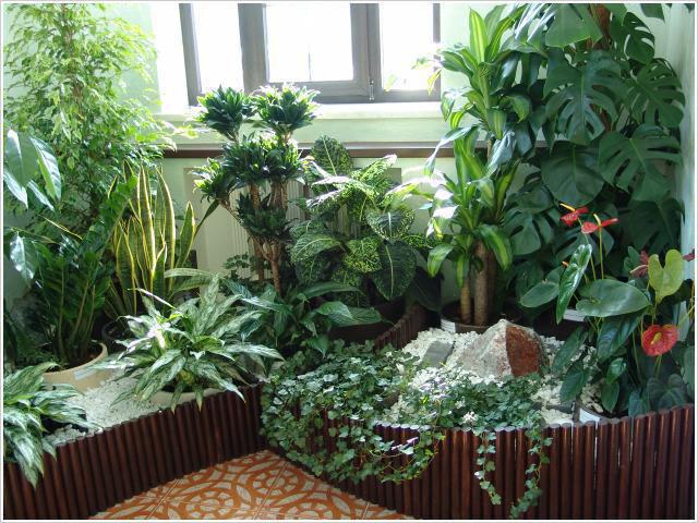 Подкормка для комнатных растений удобрениями из привычных продуктов