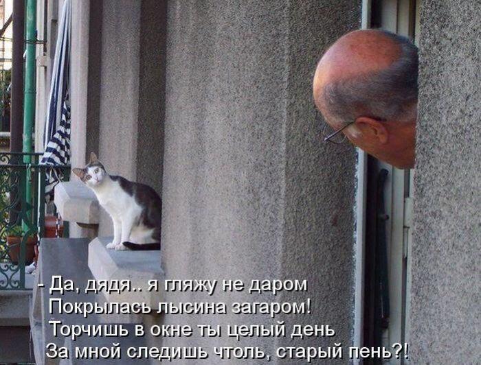 Кошачий фотопост!