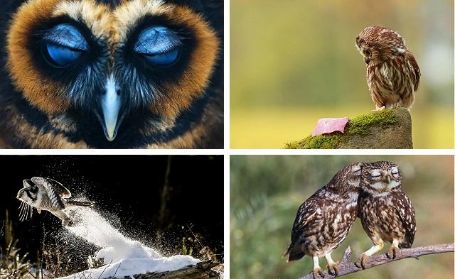 Эти удивительные совы