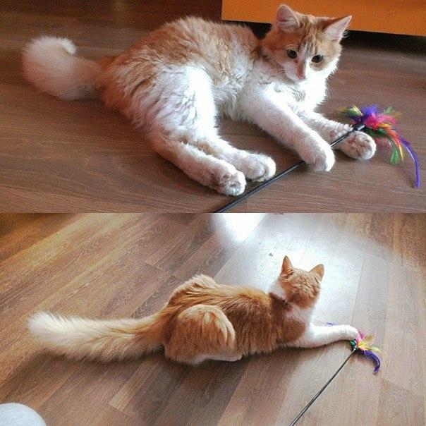 Добрая история кота Феликса