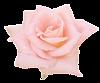 klipartroz_8071744_5171707 (100x83, 12Kb)