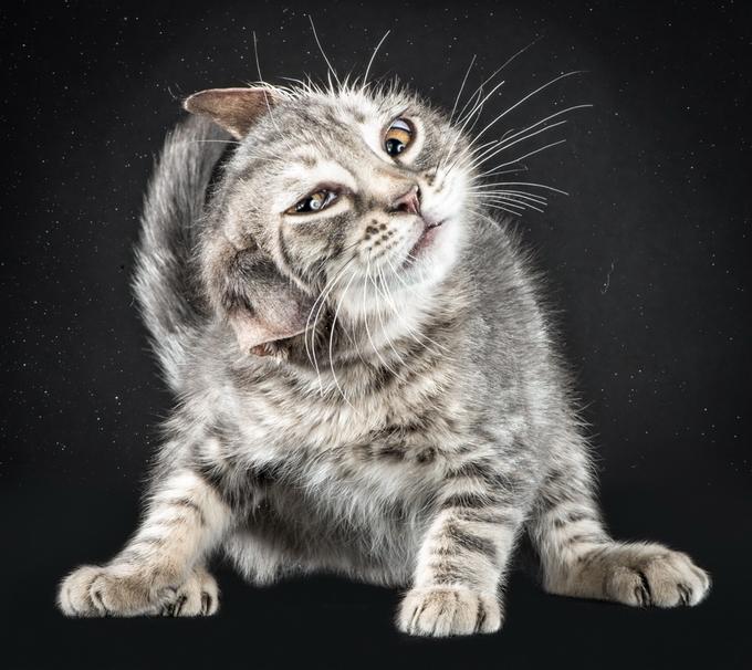 Кошки отряхиваются от воды