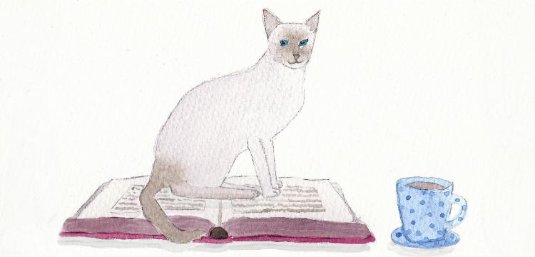 Котики и жизнь