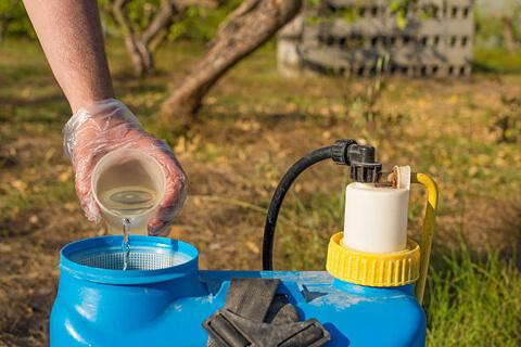 Как и чем обрабатывать смородину от вредителей и болезней