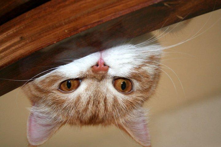 Как меня кот возненавидел