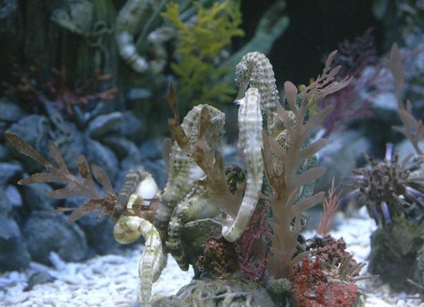 Удивительный морской конек