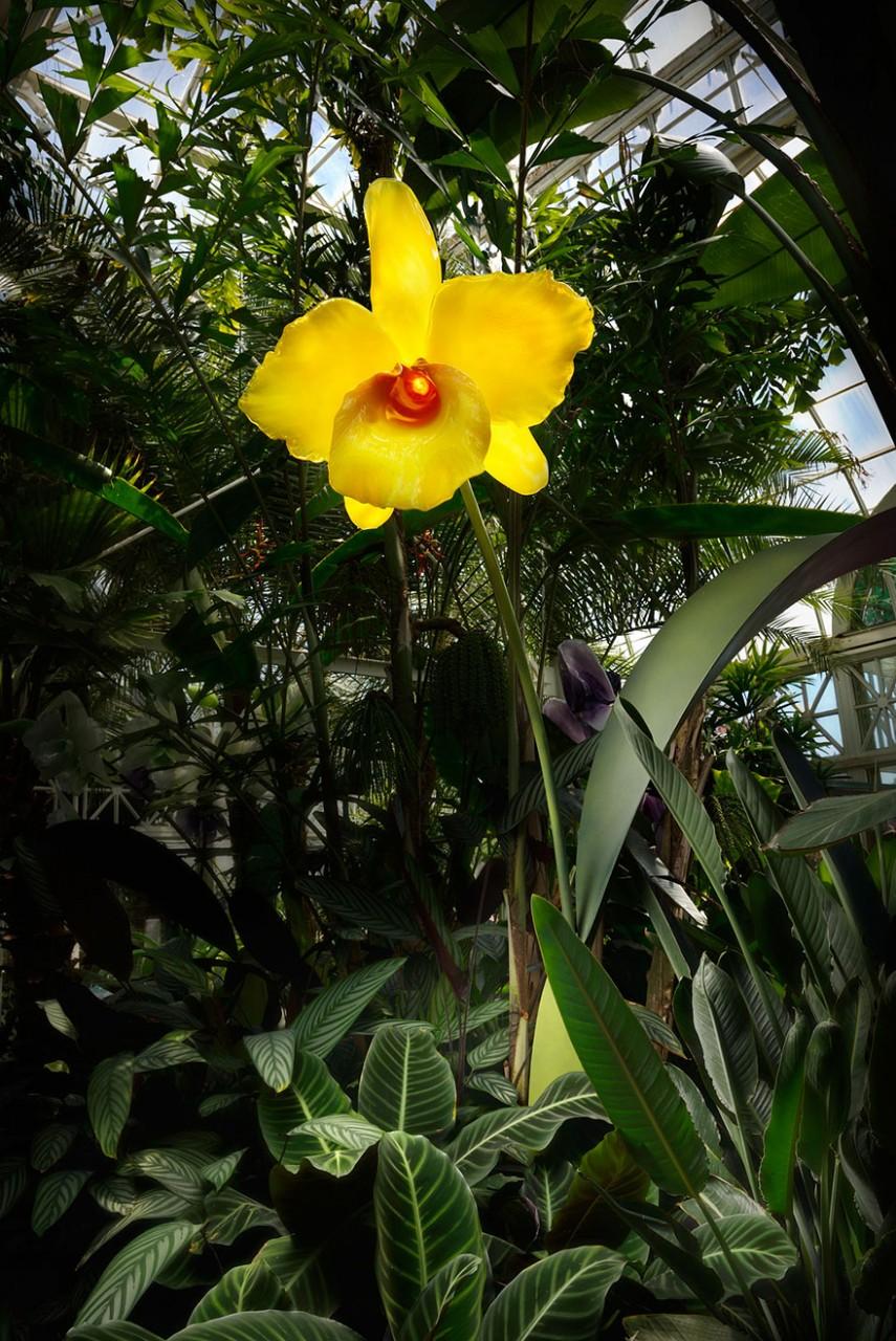 Гигантские орхидеи из стекла