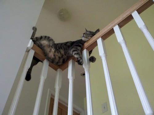 Сиеста для кота)))