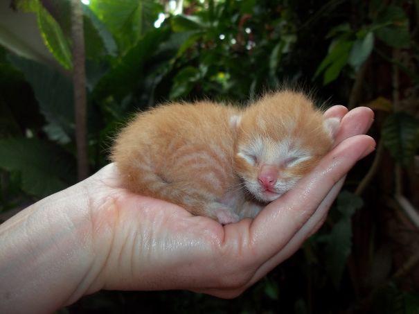 24. Котёнок на ладони детеныши, животные, милота