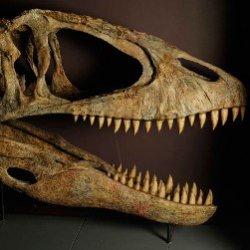 10 невероятных музеев динозавров
