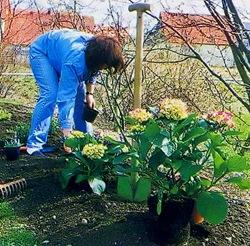 Защита цветущих кустарников