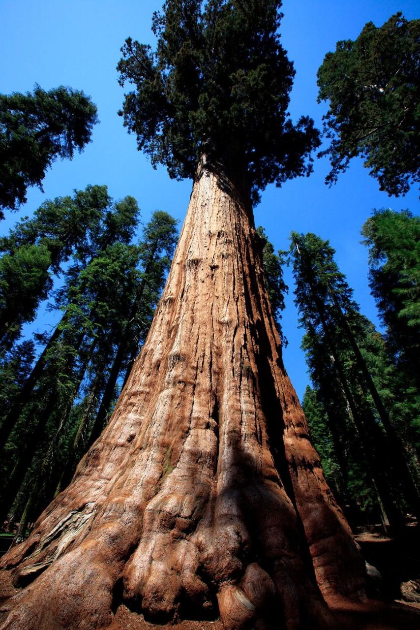 NewPix.ru - Самые необычные деревья в мире