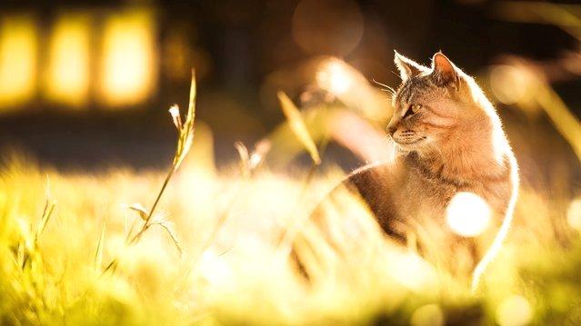 Веселые кошки от Seiji Mamiya