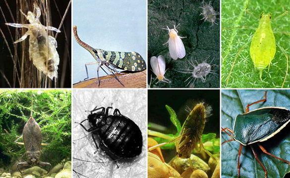 Самые опасные насекомые на даче