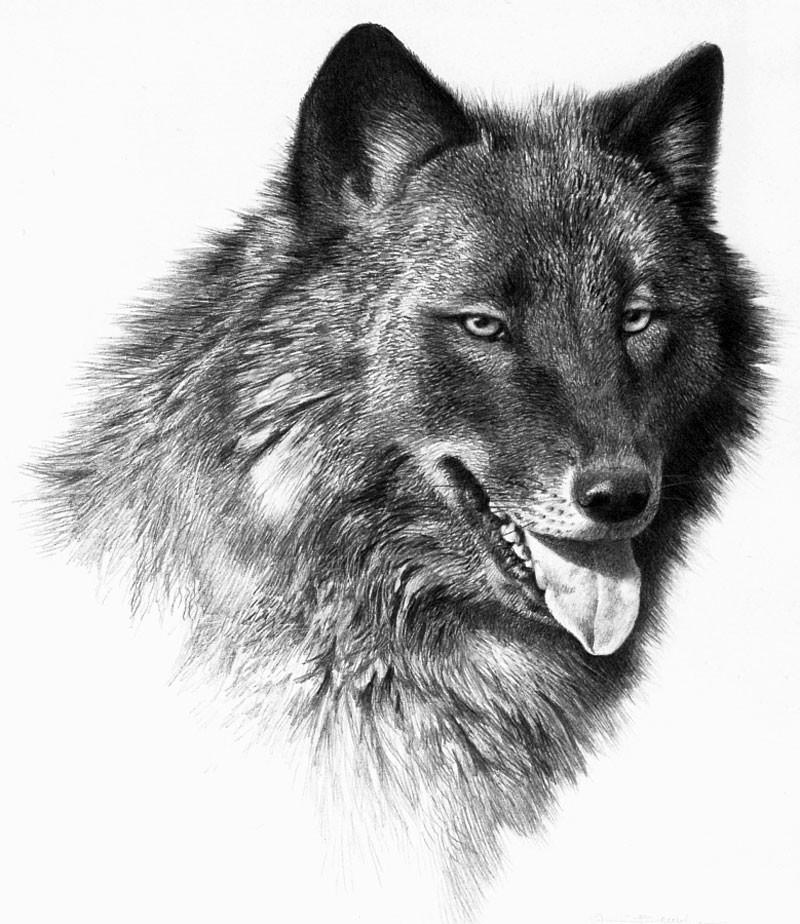 Карл Брендерс. Волки Карл Брендерс, волки, художник