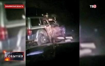 Дело переехавшего медведя на машине жителя Сахалина дошло до суда