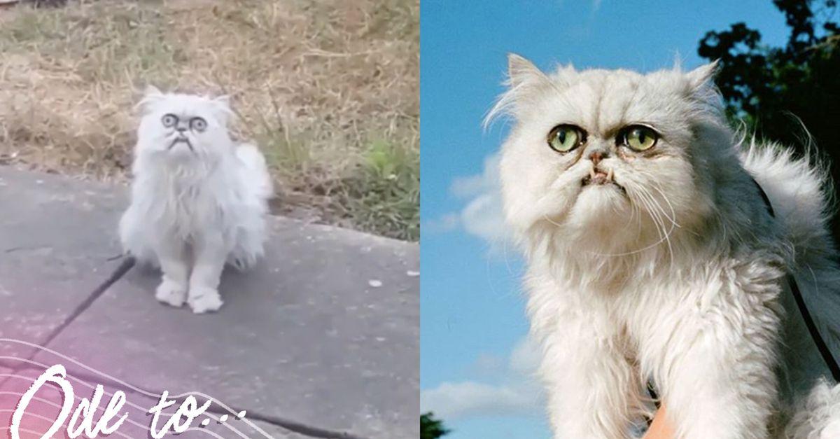 «Это чучело или живой кот?»: эта мордочка вполне может стать новым мемом про отчаяние