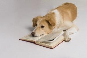 В Подмосковье собака нашла книгу Пушкина стоимостью 800 тыс. рублей.