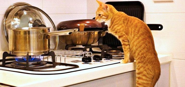 Картинки по запросу готовить самостоятельно