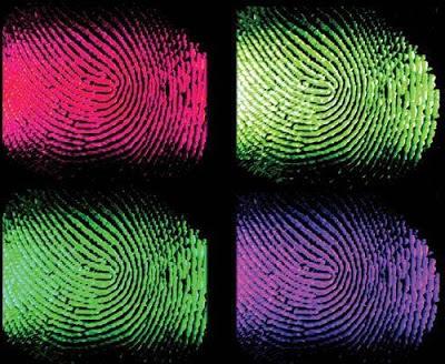 О чем расскажут отпечатки пальцев?