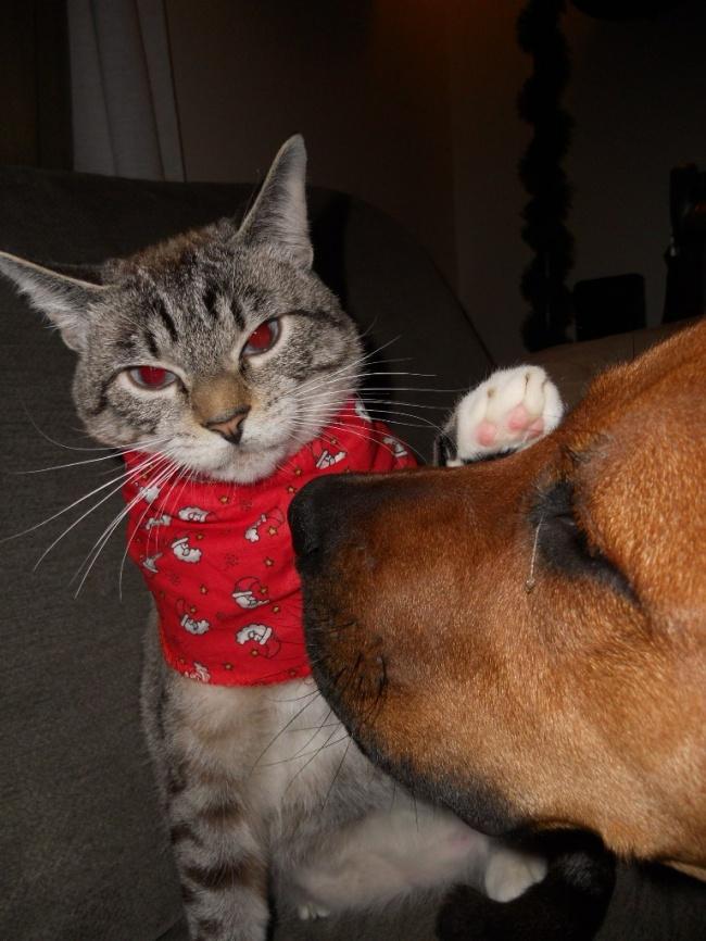 15 котов, которые знают, кто в доме хозяин