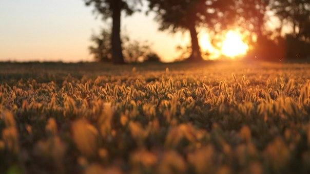Утренний рассвет..