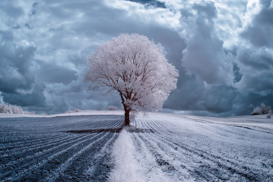 The Majestic Beauty Of Trees In Poland Captured In Infrared Photography