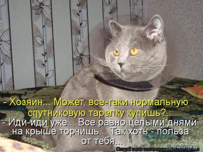 Юморная котоматрица 27